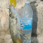 בינית שנתפסה ליד בקבוק מים