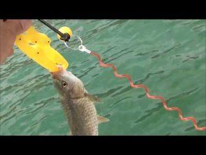 דייג בכנרת בזריחה 8.6.18 עם אורחת מיוחדת שהפגיזה