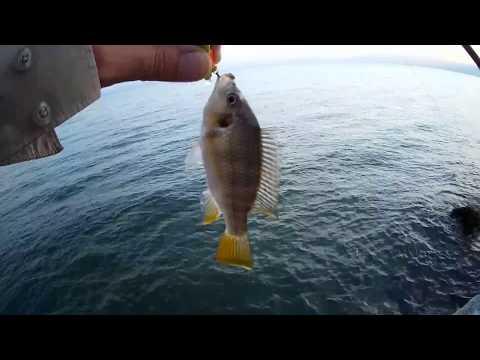 דייג בכנרת 6.11.18  איך לעבוד עם ציקדה, קצת מושטים, ביניות ואיך לא שפמנון גדול