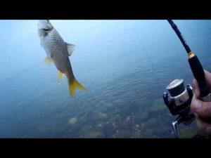 לדוג בגשם בכנרת חוויה בלתי רגילה ורטובה , יום שישי בזריחה גשם והרבה דגים