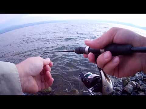 בוקר מלא פעילות דגים קטנים יחסית פגישה עם רפי על הסלעים