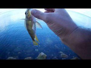 גנבתי שעתיים דיג בחג החנוכה, מושט גדול ועוד כמה קטנים היה רגוע בסך הכול